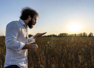 La quinoa Quinn dell'azienda Tundo Sebastiano , nel pre Parco del Delta del Po