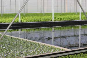 Sfera Agricola risparmia il 90% d'acqua grazie all'idroponica