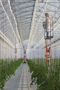 Sfera Agricola punta ad arrivare a 300 ettari in idroponica in dieci anni