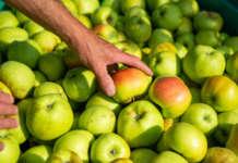 Ottima performance per le mele, a valore e a volume, che guidano le esportazioni italiane