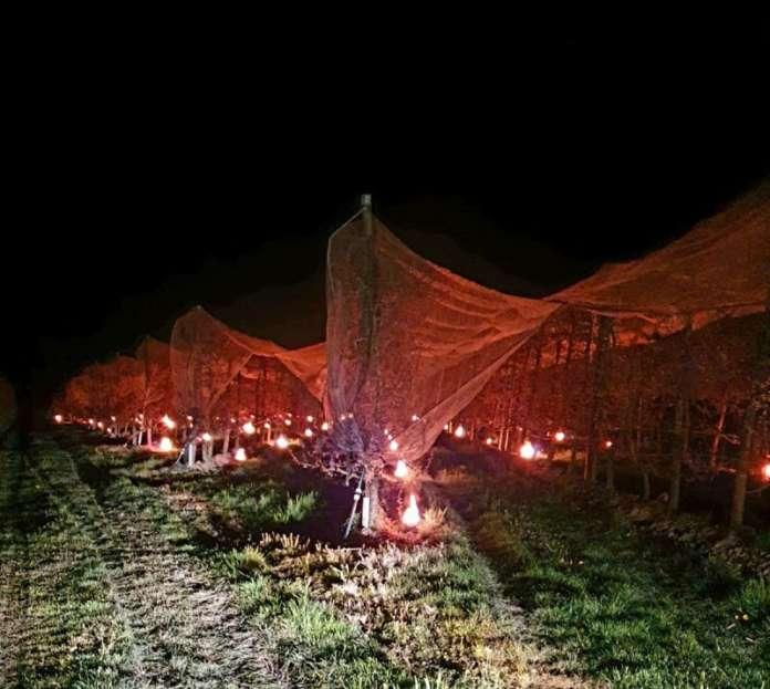 Candele nei campi per aumentare le temperature e proteggere le colture dal freddo