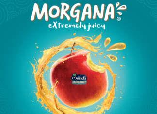 Morgana si caratterizza per la polpa succosa e lunga shelf-life