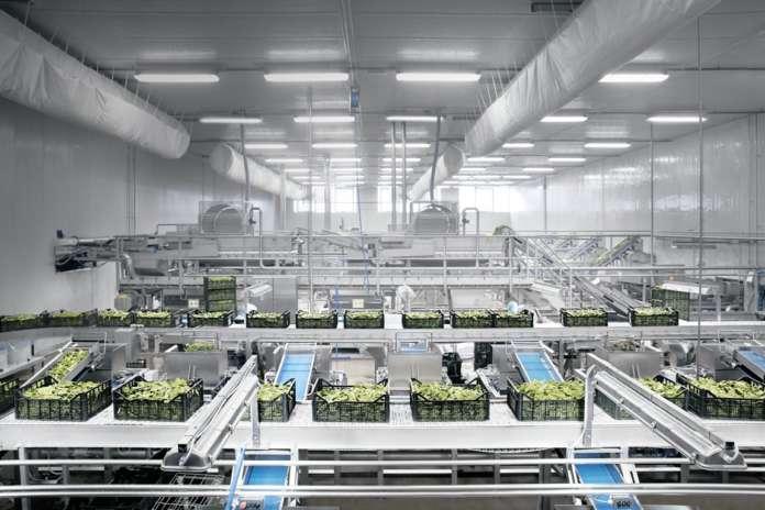 Cultiva produzione