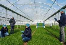Le coltivazioni in serra di Ortomad, società partecipata da La Linea Verde