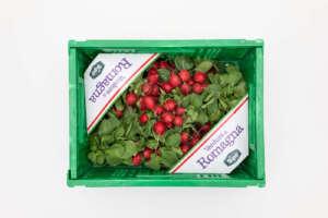 Ravanelli di Romagna Sipo, rossi a polpa bianca