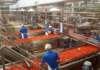 Impianto di trasformazione pomodoro Albinia