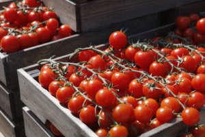 Pomodori Agromonte