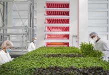 Serre idroponiche di Agricola Moderna