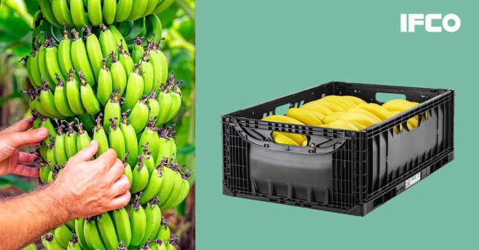 Ifco, la nuova cassetta per il trasporto delle banane