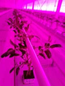 Illuminazione Led per colture in idroponica