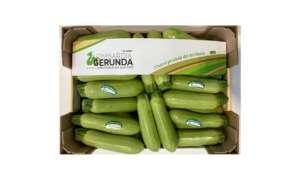 Zucchine chiare a marchio Lombardia Gerunda