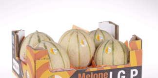 Melone Mantovano con marchio Igp retato