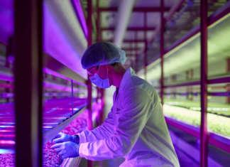 Impianto Zero di vertical farming a Pordenone