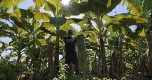 Chiquita tutela la biodiversità nel mondo