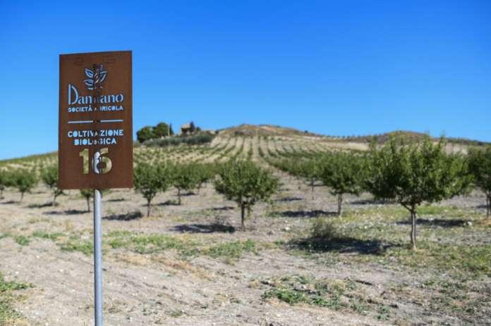 Damiano produce frutta secca biologica dal 1976