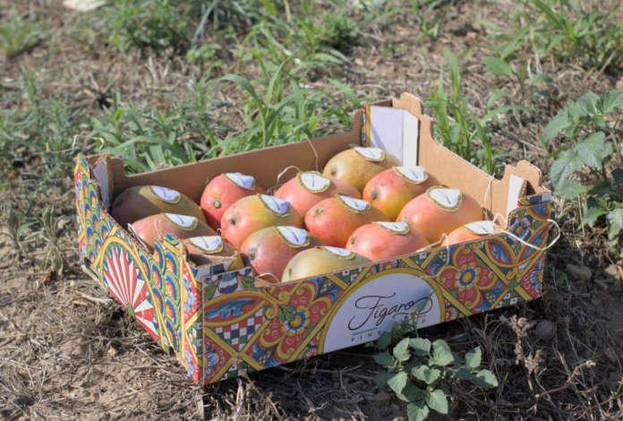 Mango Figaro Filiera Italia di MacGarlet