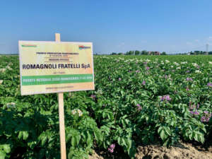 Patate Romagnoli sostenibili, residuo zero